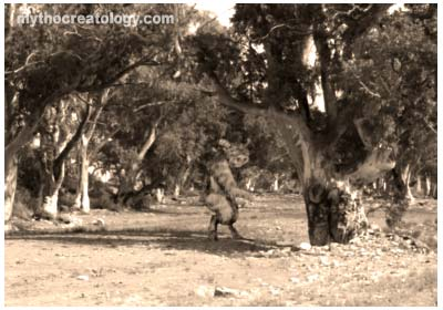 Cryptozoology Australian Bigfoot Photo