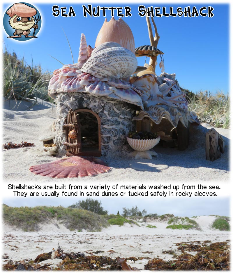 Shell shack Mythic Australia magical homes