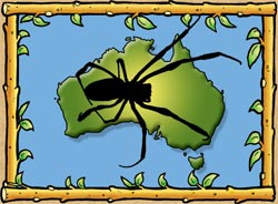 Aussie Facts Spider